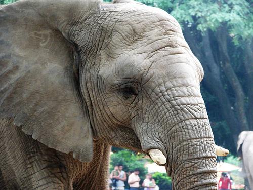 elefante del zoológico de Buenos Aires